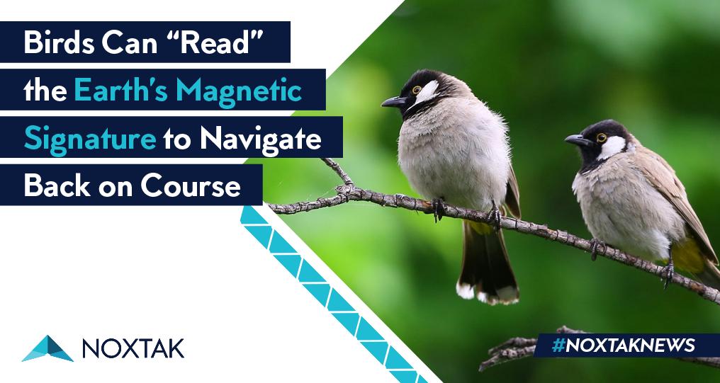 birds magnetic fields